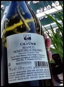 Olivar back